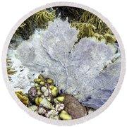 Round Beach Towel featuring the photograph Sea Fan Coral by Perla Copernik