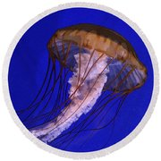 Round Beach Towel featuring the photograph Sea Jelly by Jeanette French