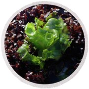Round Beach Towel featuring the photograph Sea Lettuce by Adria Trail