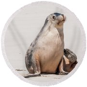 Sea Lion 1 Round Beach Towel by Werner Padarin