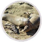 Sea Lion Family Round Beach Towel