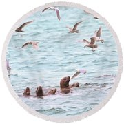 Sea Lions And Gulls - Herring Spawn Round Beach Towel by Peggy Collins