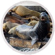 Sea Lions On The Floating Dock In San Francisco Round Beach Towel