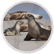 Round Beach Towel featuring the photograph Sea Lions by Werner Padarin