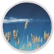 Round Beach Towel featuring the photograph Sea Oats On A Blue Day by Colleen Kammerer