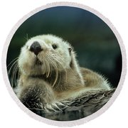Sea Otter  Round Beach Towel by Tim Fitzharris
