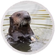 Sea Otter With Clam Round Beach Towel