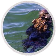 Sea Otter With Lunch Round Beach Towel