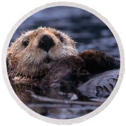 Sea Otter Round Beach Towel by Yva Momatiuk and John Eastcott and Photo Researchers