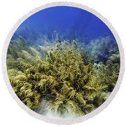 Round Beach Towel featuring the photograph Sea Rod Corals  by Perla Copernik