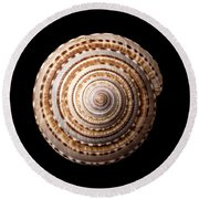 Sea Shell Known As Staircase Or Sundial Round Beach Towel