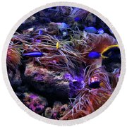 Sea Spaghetti  Round Beach Towel