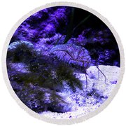 Round Beach Towel featuring the photograph Sea Spider by Francesca Mackenney