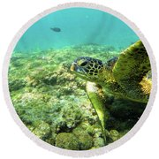 Sea Turtle #2 Round Beach Towel