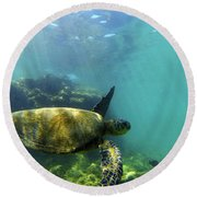 Round Beach Towel featuring the photograph Sea Turtle #5 by Anthony Jones
