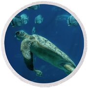 Sea Turtle Round Beach Towel by Barbara Bowen
