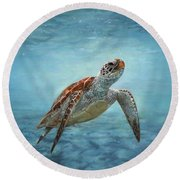 Sea Turtle Round Beach Towel by David Stribbling