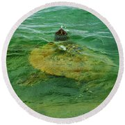 Sea Turtle Up For Air Round Beach Towel