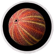 Sea Urchin 2 Round Beach Towel