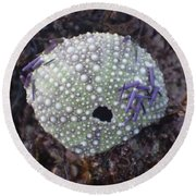 Sea Urchin Shell Round Beach Towel by Adria Trail
