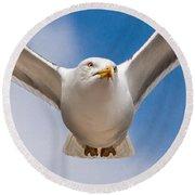 Seabird Closeup Round Beach Towel