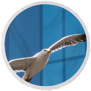 Seabird Flying On The Glass Building Background Round Beach Towel