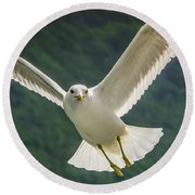 Seagull At The Fjord Round Beach Towel
