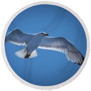 Round Beach Towel featuring the photograph Seagull by Davor Zerjav