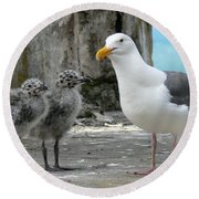 Seagull Family Round Beach Towel