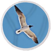 Seagull In Flight Round Beach Towel