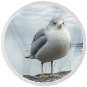Round Beach Towel featuring the photograph Seagull Model by Garvin Hunter