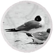 Seagull Nap Time Round Beach Towel
