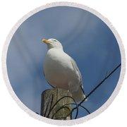 Seagull Perching. Round Beach Towel