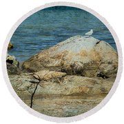 Seagull On A Rock Round Beach Towel