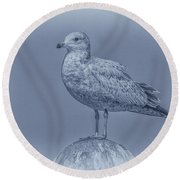 Seagull On Post In Blue Round Beach Towel by Randy Steele