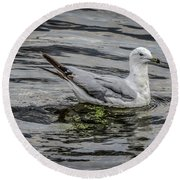 Seagull On The River Round Beach Towel by Ray Congrove