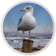 Seagull On The Shoreline Round Beach Towel