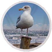 Seagull On The Shoreline Round Beach Towel