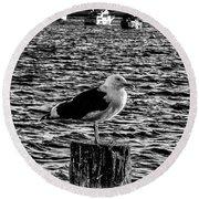 Seagull Perch, Black And White Round Beach Towel