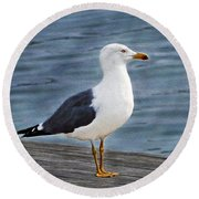 Seagull Portrait Round Beach Towel