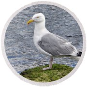 Round Beach Towel featuring the photograph Seagull Posing by Glenn Gordon