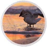 Seagull Stretch At Sunrise Round Beach Towel