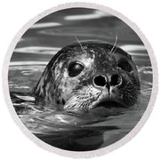 Seal In Water Round Beach Towel