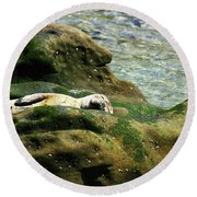 Round Beach Towel featuring the photograph Seal On The Rocks by Anthony Jones