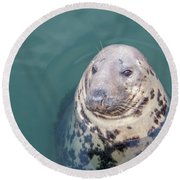 Seal With Long Whiskers With Head Sticking Out Of Water Round Beach Towel