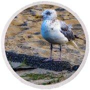 See The Gull Round Beach Towel