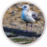 Round Beach Towel featuring the photograph See The Gull by Kendall McKernon