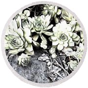 Round Beach Towel featuring the photograph Sempervivum - Ebony And Ivory  by Janine Riley