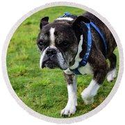 Leroy The Senior Bulldog Round Beach Towel