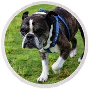 Leroy The Senior Bulldog Round Beach Towel
